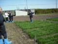牧草の種類・植生の見分け方